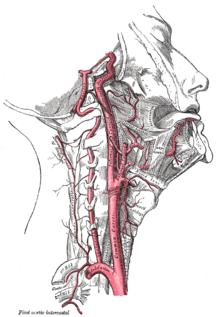 Carotid pulse